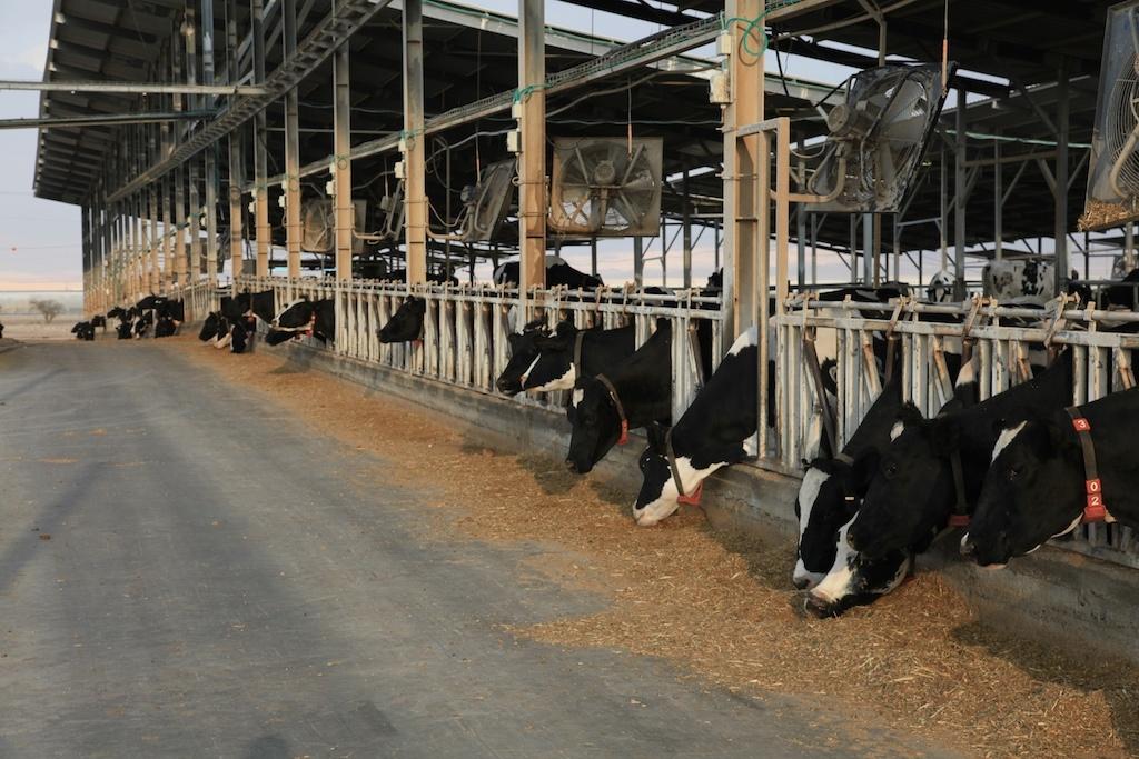 נוהל דיגום הפלות לגורמי הפלה ברפת החלב
